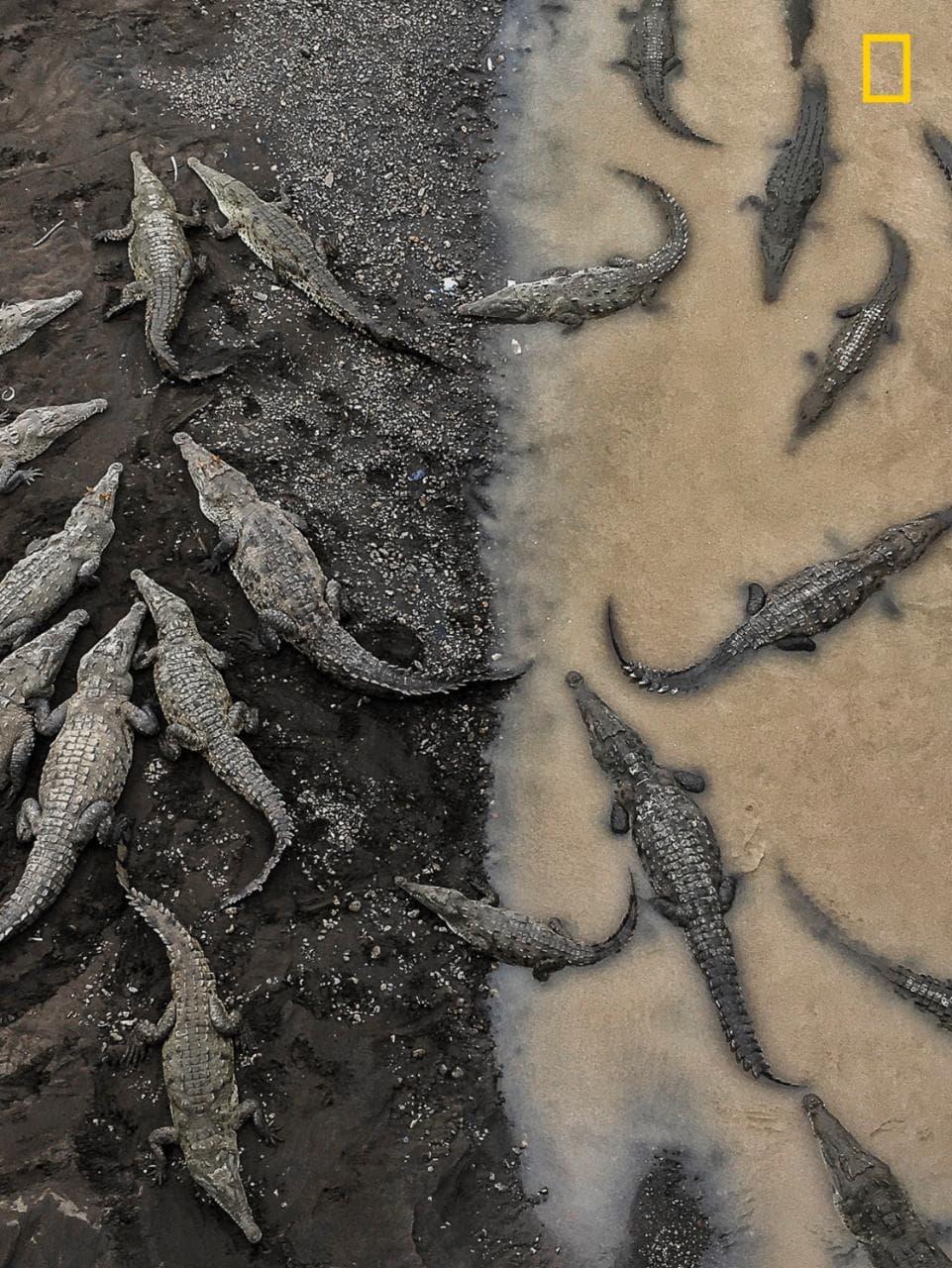 Категория «Природа», 3-е место — крокодилы в реке Тарколес. Фото: Tarun Sinha