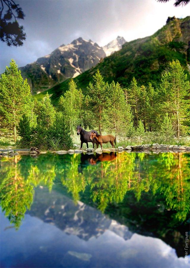 Как же не хочется покидать Кавказ. Ужасно не хочется! Закончился поднебесный отпуск, но осталас