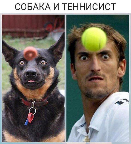 Сходства