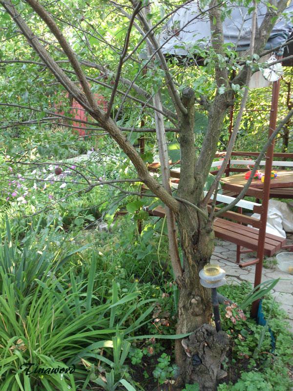 деревья-2.jpg