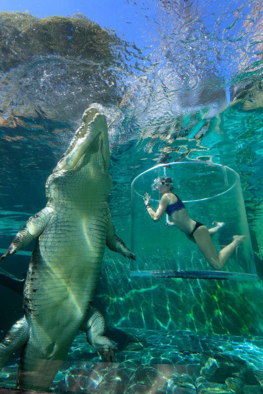 Туристы платят $150, чтобы поплавать рядом с крокодилами