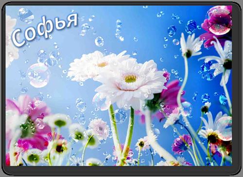 С Днем ангела, Софья! Цветы на голубом фоне открытки фото рисунки картинки поздравления