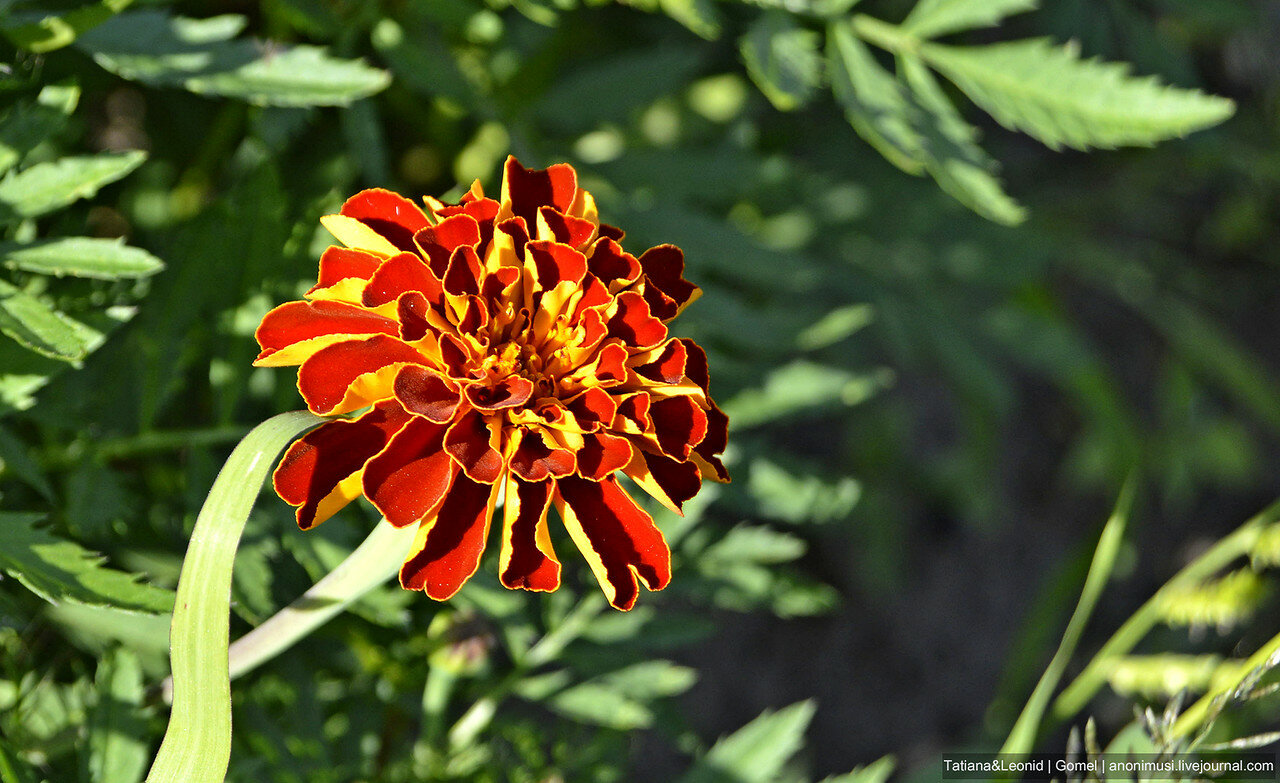 Цветочковое