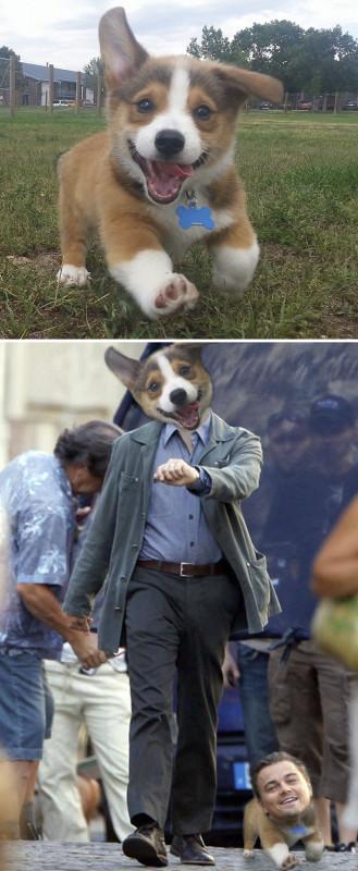 Счастливый щенок.