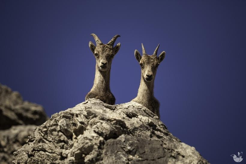 20 снимков животных, от которых невозможно оторвать взгляд (20 фото)