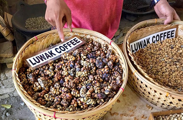 Как так вышло, что самый дорогой кофе в мире добывают из экскрементов куницы? (6 фото)