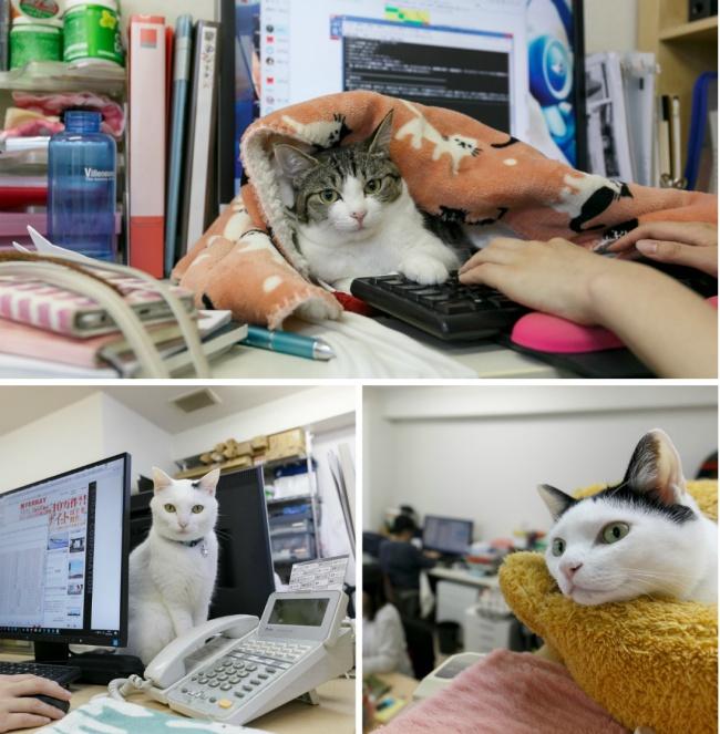© eastnews  Японская компания Ferray Corporation приютила бродячих кошек. Все они теперь живут