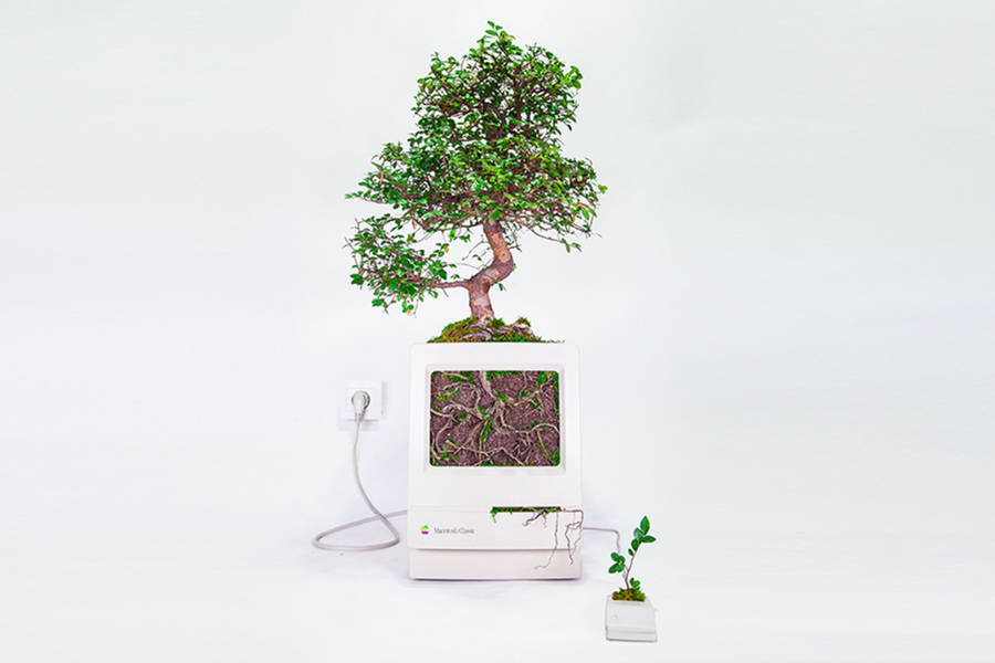 Old Apple Products Turned into Plants (7 pics)
