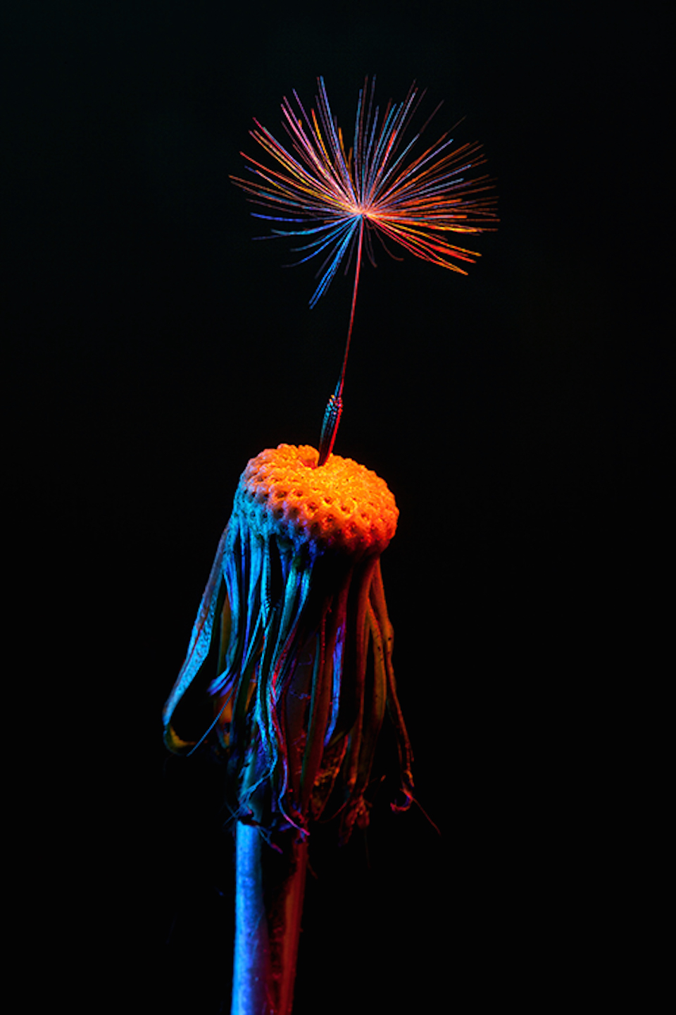 Psychedelic Photographs of Flowers