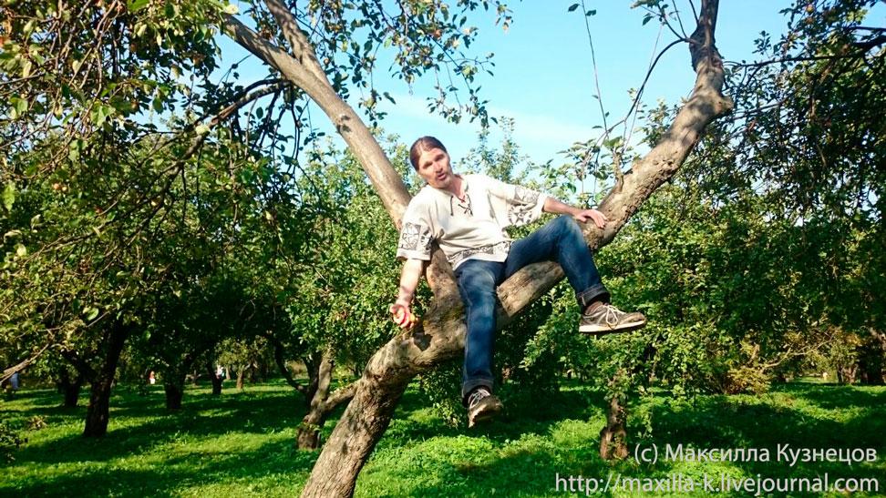 На яблоне
