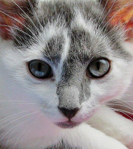 Портрет котёночка