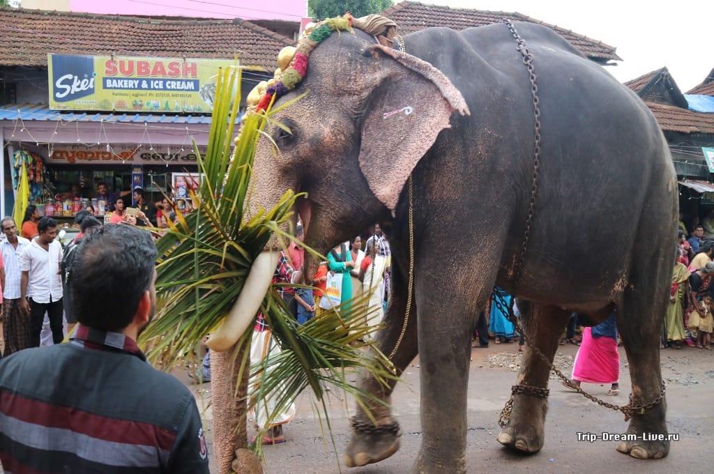 Бедный слоник