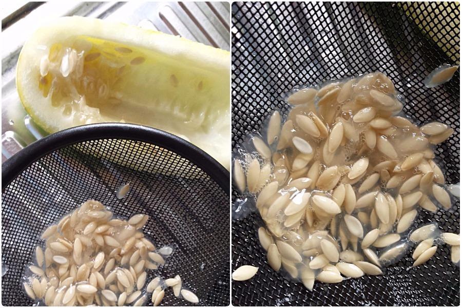 Как собрать и сохранить семена огурцов