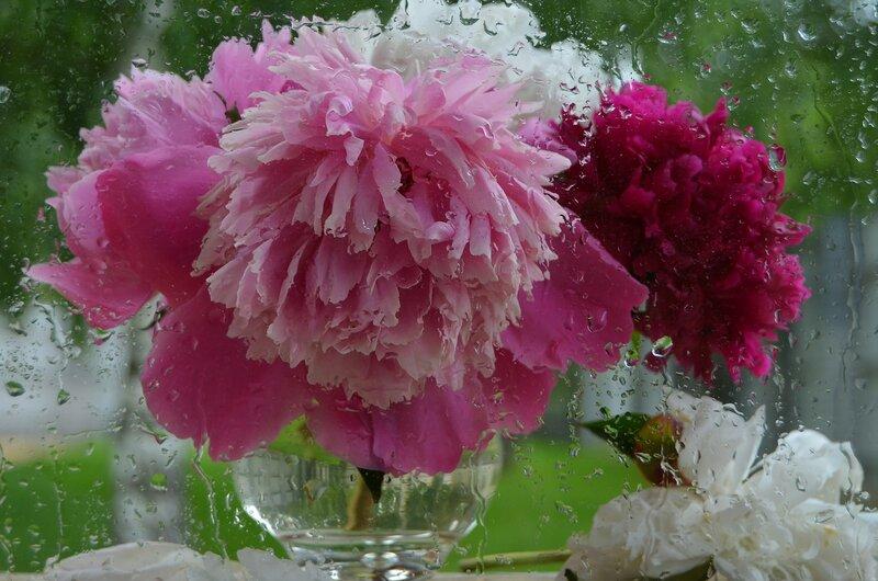 Цветов душистых розовые прядки