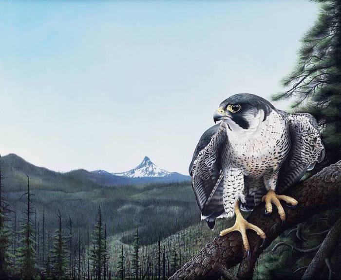 Нарисованные птицы / художник Tom Mital