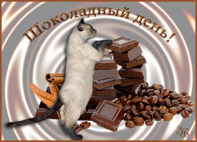 Всемирный день шоколада 11 июля. Шоколадный день. Киса и шоколад