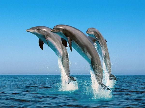 Открытки. Всемирный день моря. Дельфины в прыжке