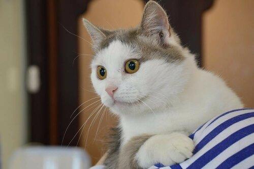 Зефира Зизи кошка из приюта догпорт