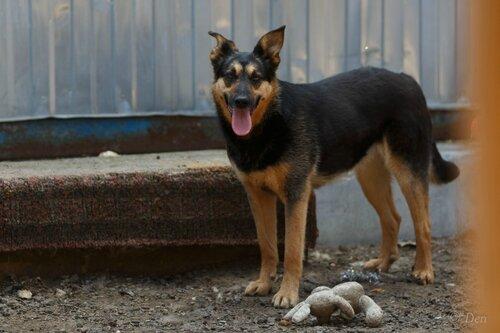 Джоли-Питт собаки из приюта догпорт фото