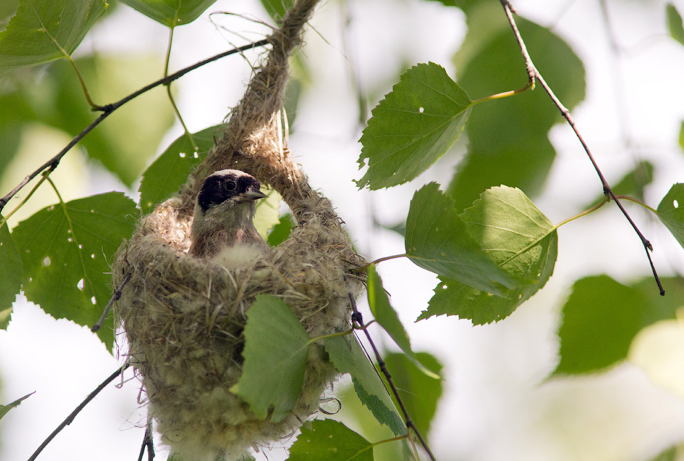 9. Когда-то, когда я только начинал снимать, эта птица произвела на меня громадное впечатление.