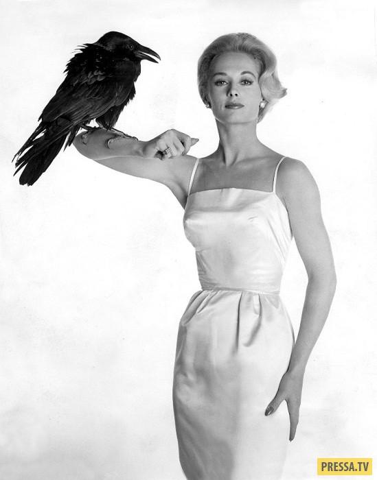 """Фото Типпи Хедрен в период съемок фильма """"Птицы"""" Хичкок считал, что поскольку Типпи никогда раньше н"""