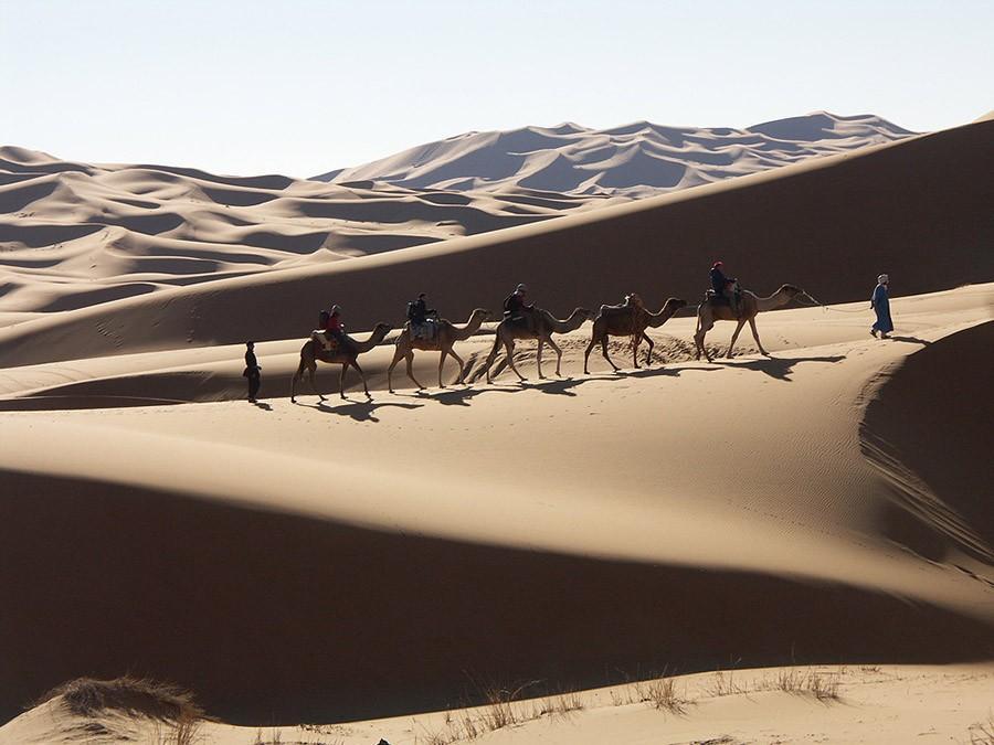42. Несмотря на это, торговцы солью из племени туарег продолжают возить свои товары из Таоденни в Ти