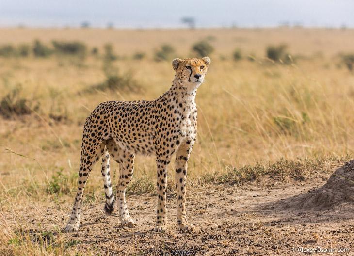 Кенийская топ-модель (17 фото)