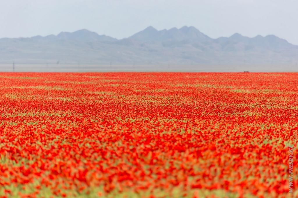 Май в Казахстане