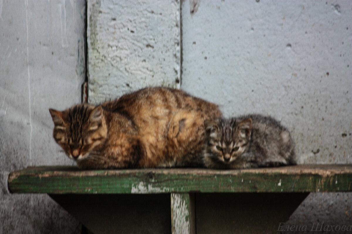 Котики-2.jpg