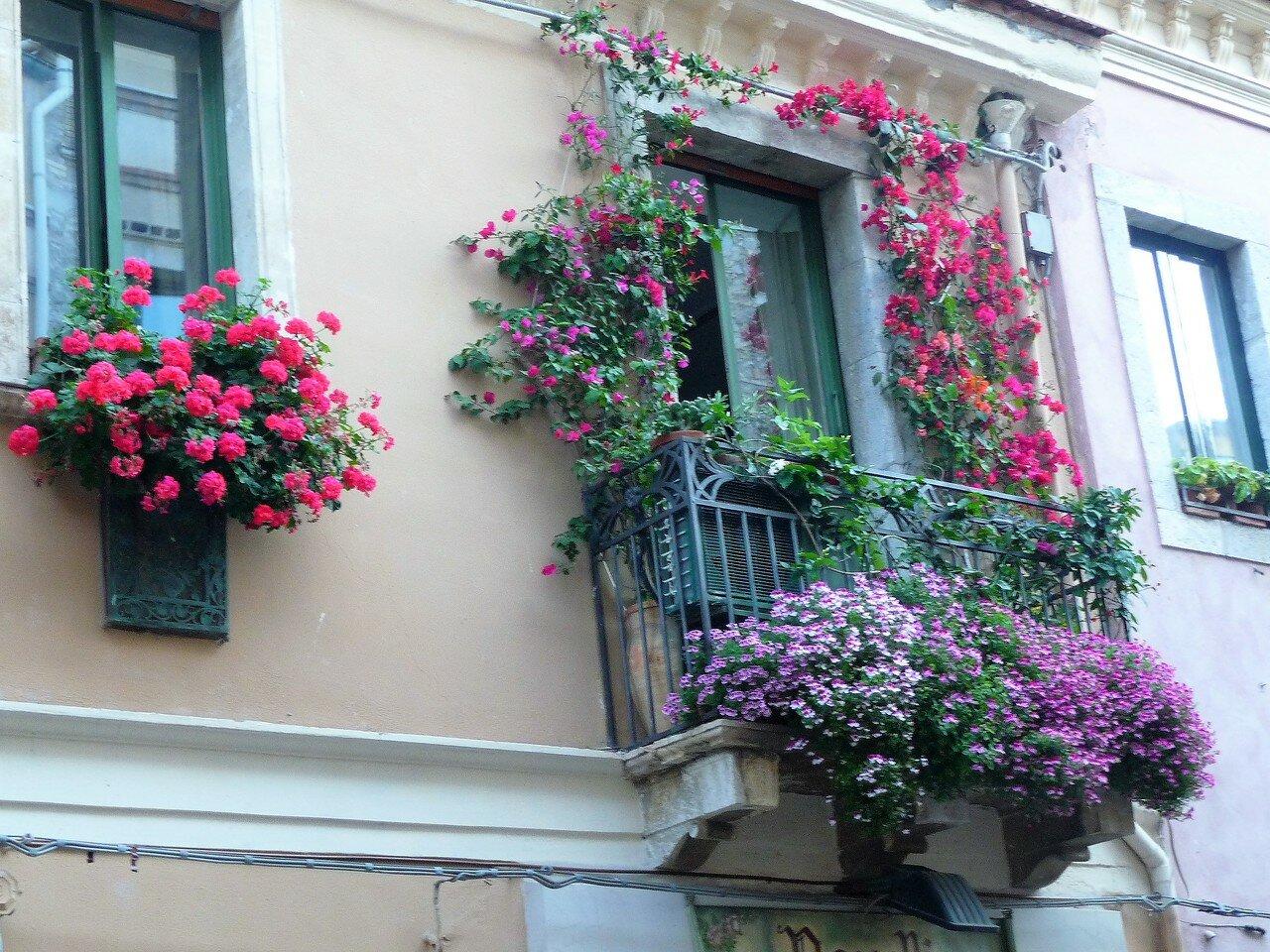 Бадкон, цветы