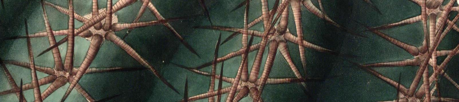 cactus-banner.jpg