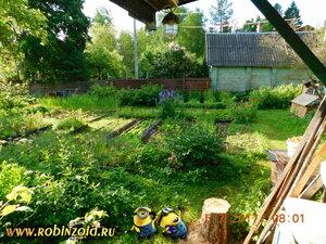 огород утром