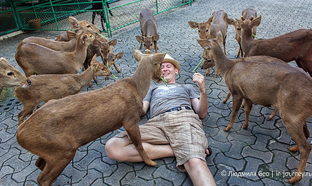 нонг нуч кормление животных