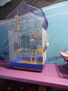 Наши попугайчики, Акватика kids