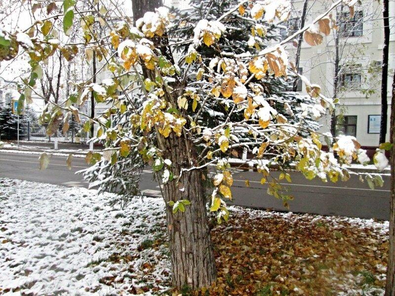 первый снег. октябрь 15