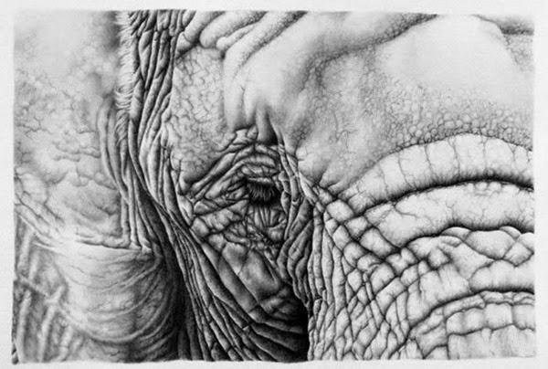 Илеана Хантер: Реалистичные карандашные рисунки 0 12d1d1 7f41686b orig