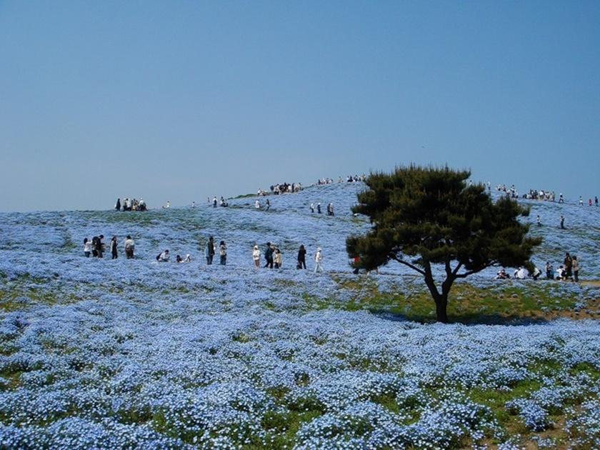 Живописный японский парк Хитати Кайхин 0 1422f5 1ed3b6eb orig