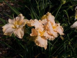 Лилейники в Саду Дракона летом 2011г 0_636b7_3866ed00_M