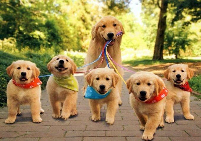 На прогулку как на праздник!