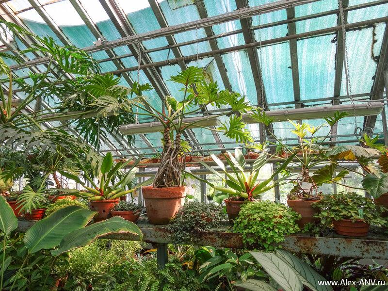 На полу все не помещаются и горшки с растениями стоят вторым ярусов на полках.