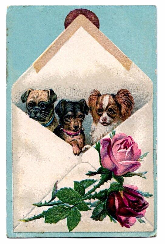 собачки на ретро открытках без отдельных
