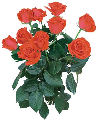 http://img-fotki.yandex.ru/get/4700/65019656.185/0_6f482_75bf9665_L.png