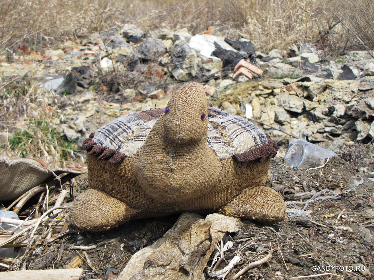 Как я встретил огромную черепаху