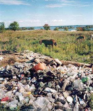 Приморский край возглавил рейтинг регионов России с самой загрязнённой почвой
