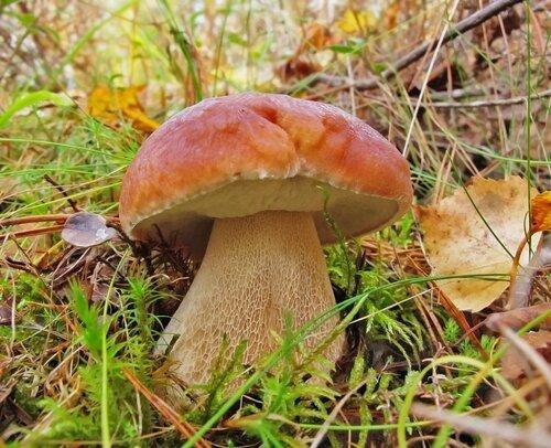 http://img-fotki.yandex.ru/get/4700/elena-lisas.f/0_54e7b_9b31b72e_L.jpg