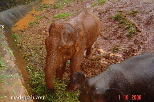 слоны, сафари парк, хайкоу, хайнань, китай
