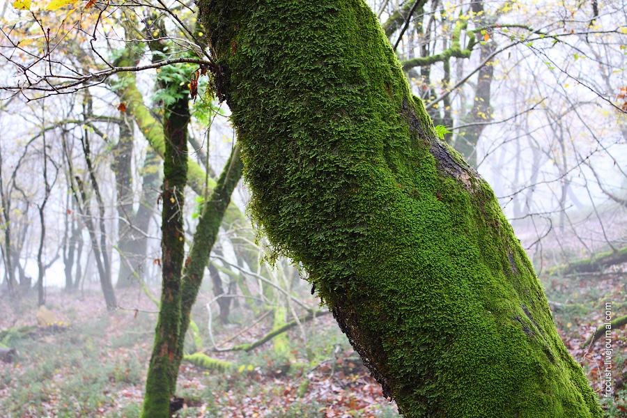 мох на стволе дерева