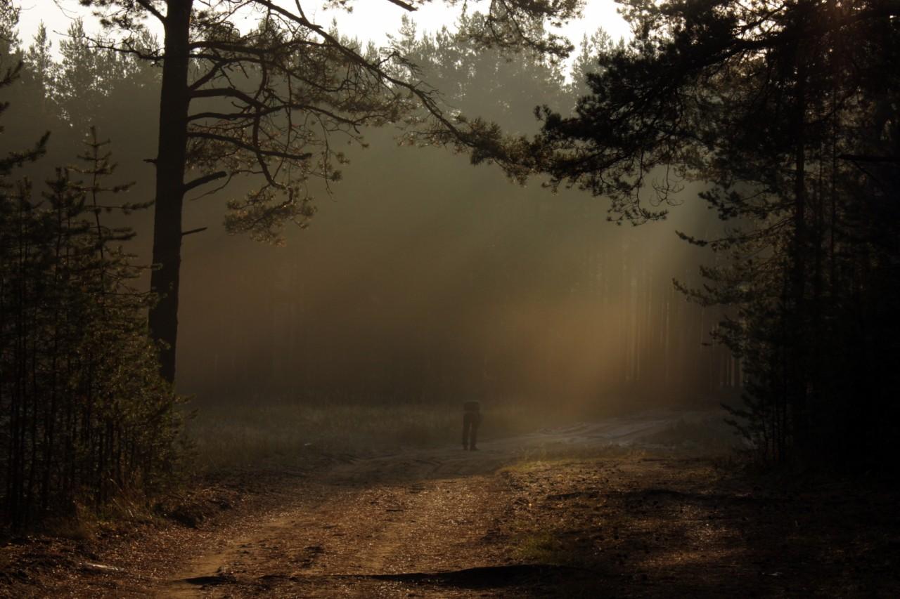 Пока ждали судно на Валаам гуляли по приозерскому лесу..туман,очень красиво..