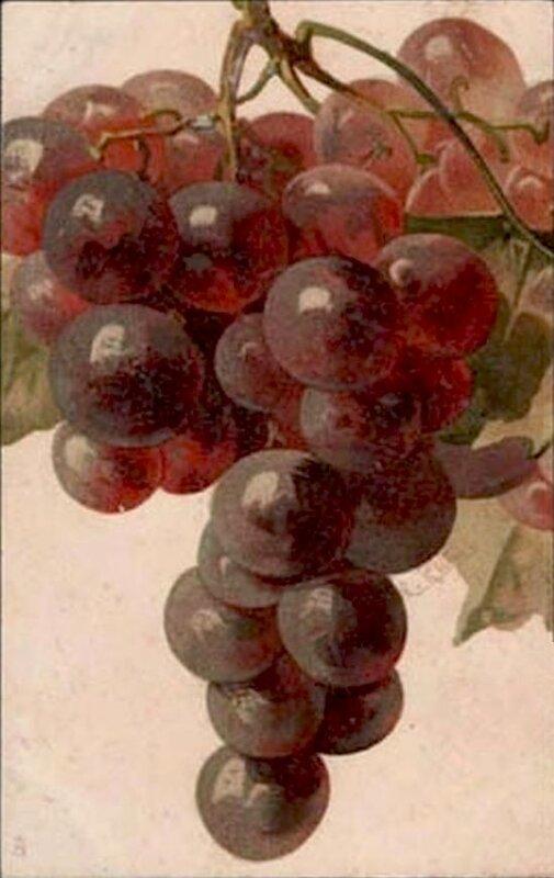 К. Кляйн. Виноград.