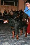 собаки на выставке